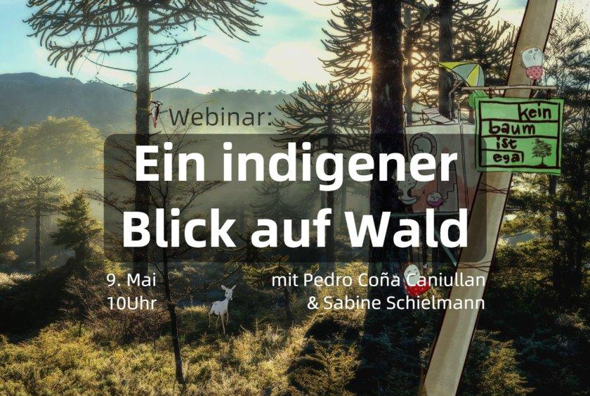 indigenerWald.max-1280x1280.format-jpeg